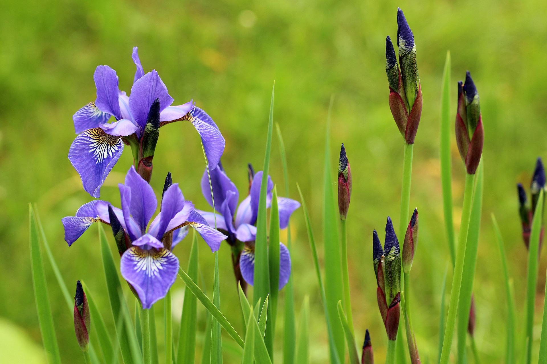 perfumes para primavera