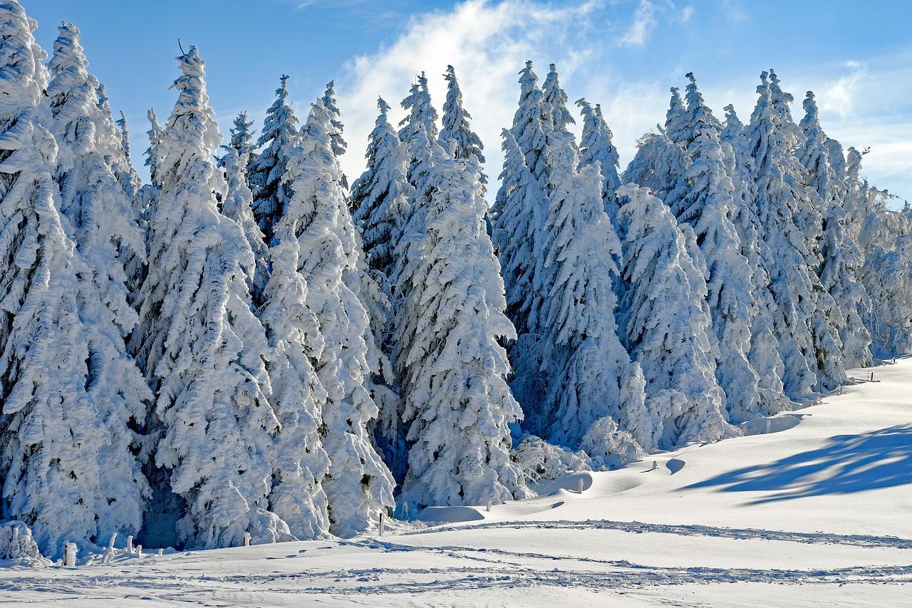 perfumes para invierno
