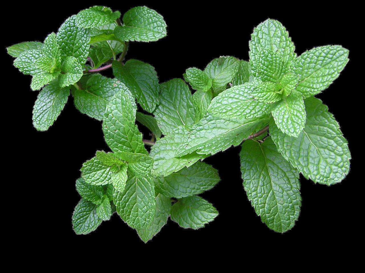 Perfumes herbales